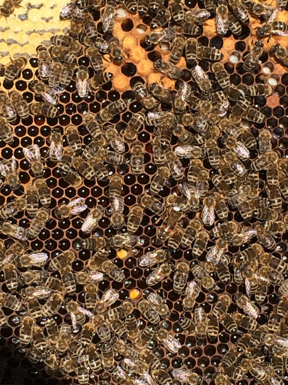 Honigwabe Wabe Flecke Saaten Handel Honig Bienen Bienenvolk Bienenstock
