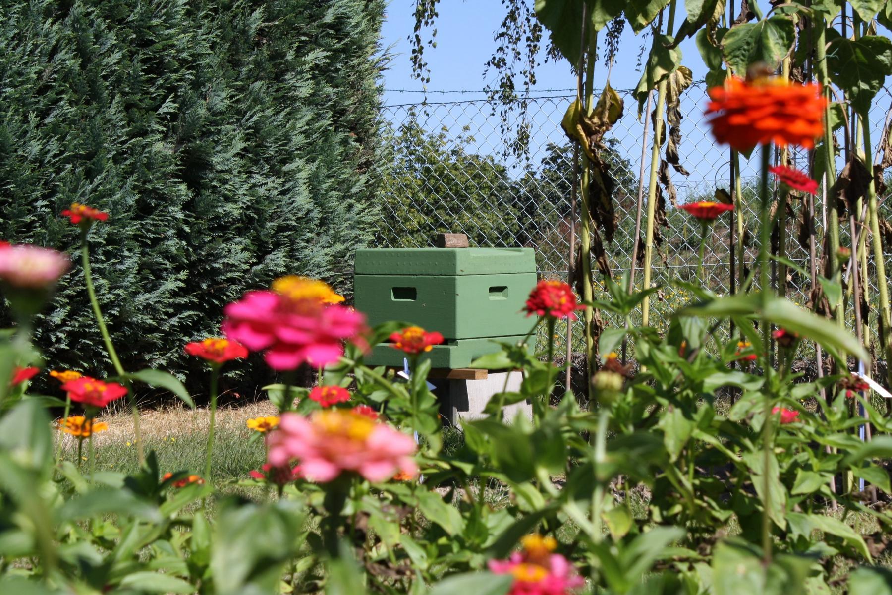 Bienenstock Bienen Bienensterben Bienenvolk Honig Flecke Saaten Handel GmbH FSH
