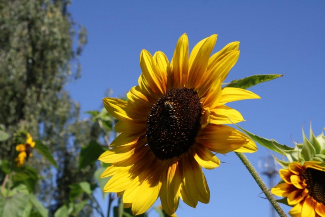 Honigwabe Wabe Flecke Saaten Handel Honig Bienen Bienenvolk Bienenstock Sunflower Sonnenblume