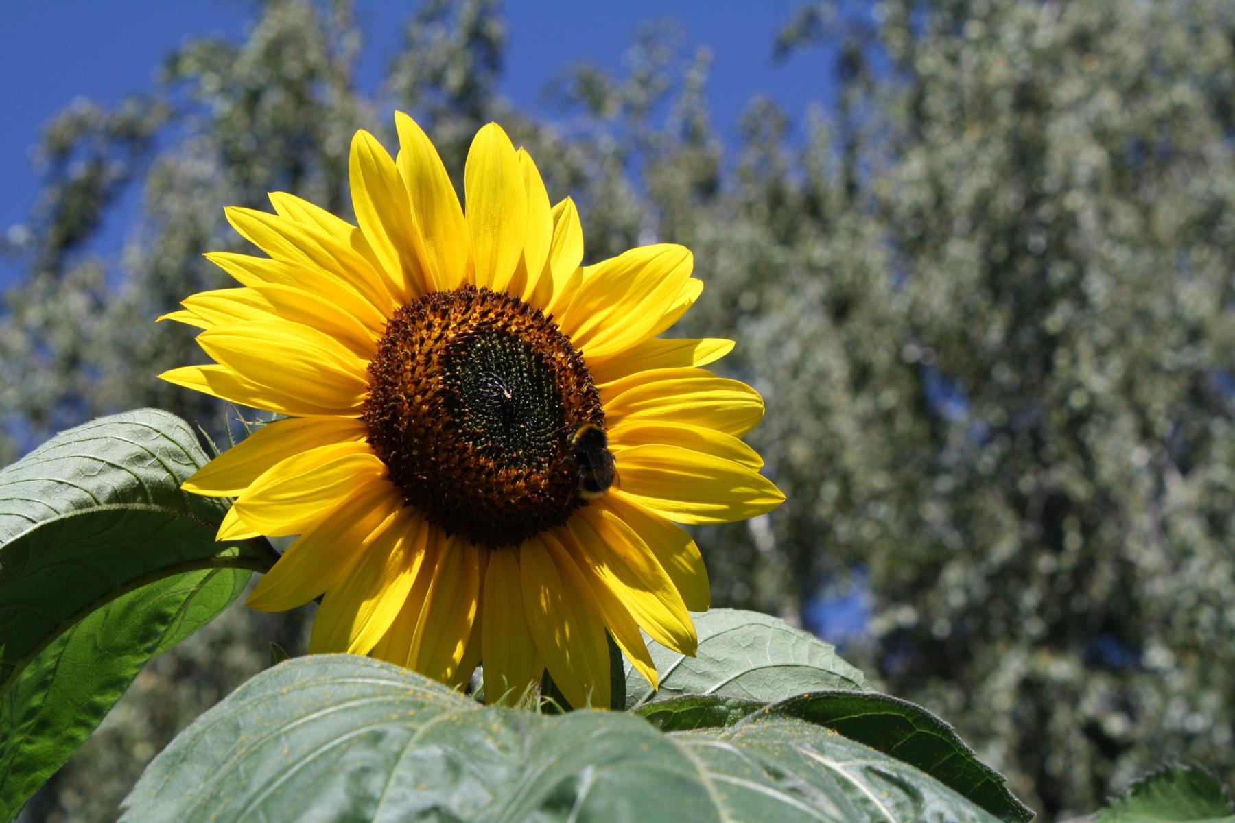 Honigwabe Wabe Flecke Saaten Handel Honig Bienen Bienenvolk Bienenstock Hummel
