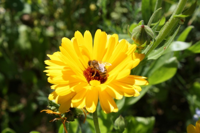 Honigwabe Wabe Flecke Saaten Handel Honig Bienen Bienenvolk Bienenstock Blumenwiesen Insekten